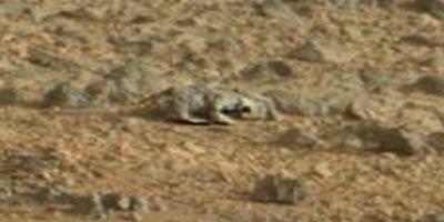 """На Марсе обнаружена """"ящерица марсианка"""""""