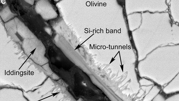 Ученые: бактерии могли создать микроструктуры в метеорите с Марса